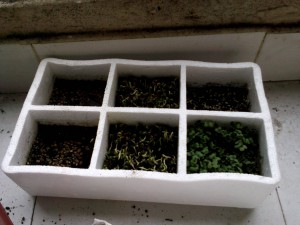 six compartment planter