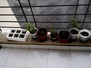 Window ledge garden