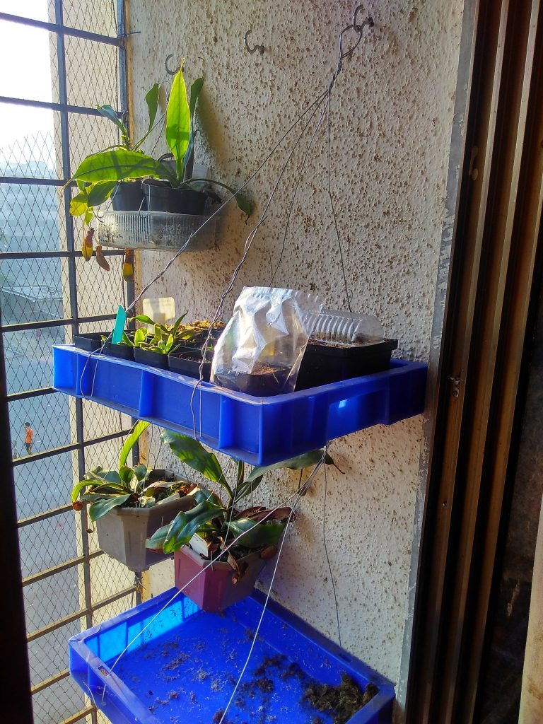 Growing carnivorous plants vertically