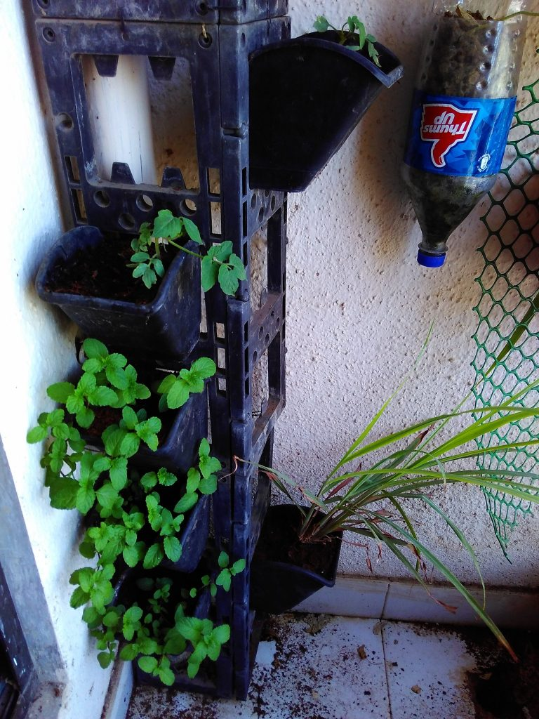 Mint growing in a vertical planter